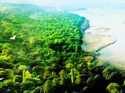 張壩桂圓林